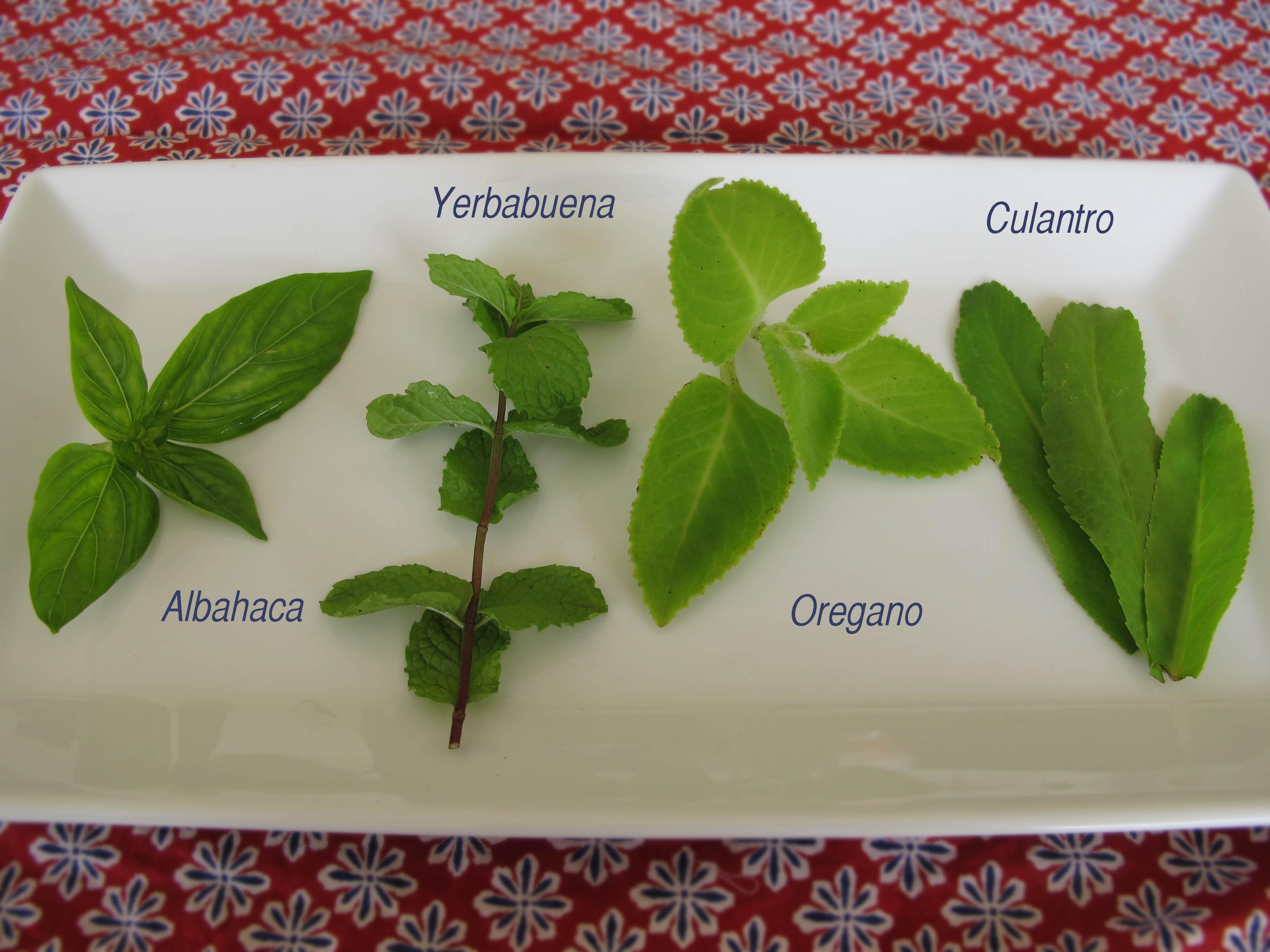 The start of a Nicaraguan herb garden | Short Term Memory
