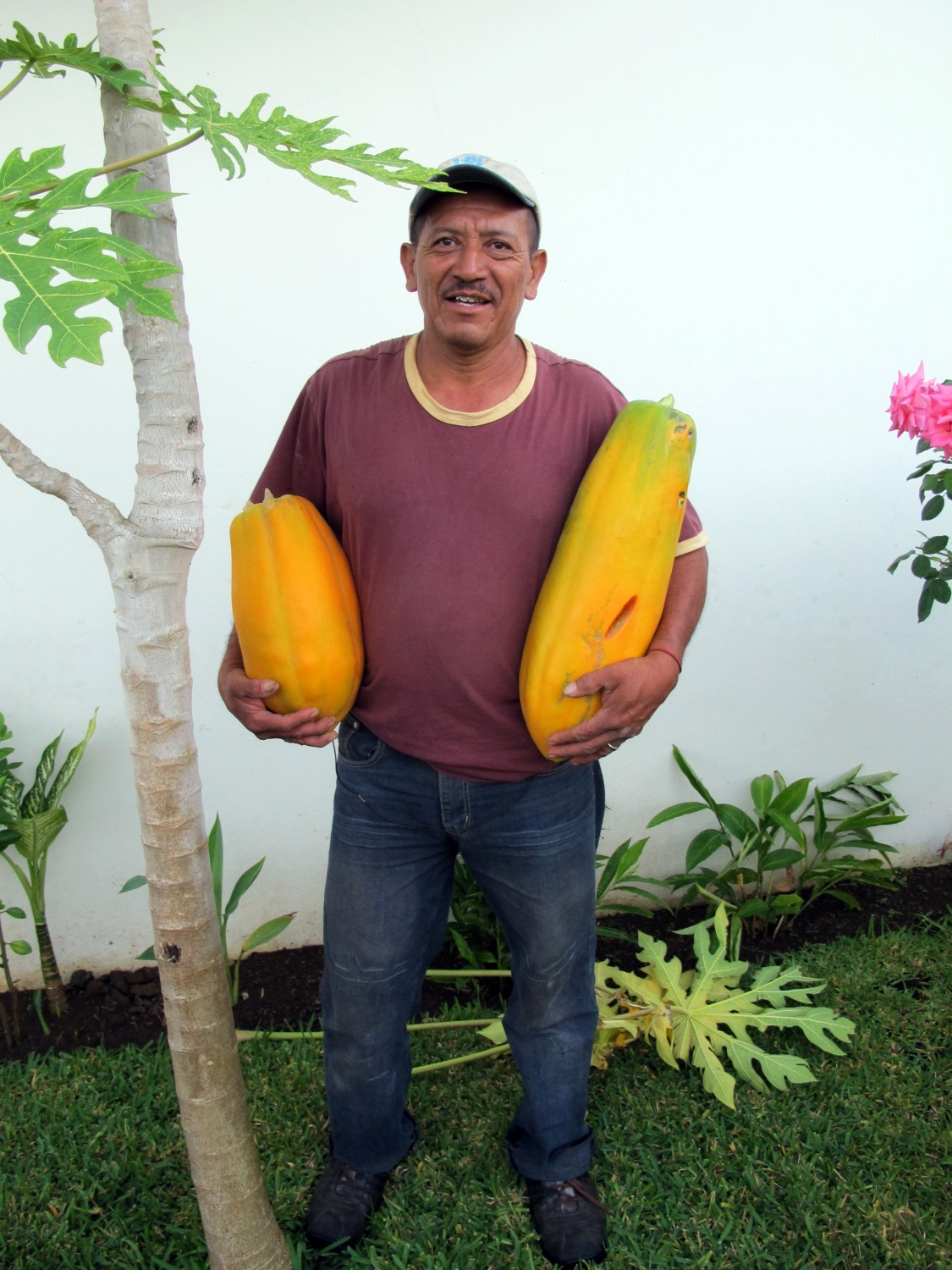 http://stmemory.files.wordpress.com/2010/12/don-diego-and-two-papaya.jpg